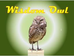 Webinar: Wisdom Owl