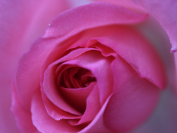Webinar: Grundlagen der feinstofflichen Pflanzenheilkunde - Heilsame Blütenbotschaften  im Mai