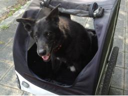 Webinar: Der Hund am Rad
