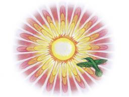 Webinar: Inspiration & Meditation - Thema: Neid & Eifersucht