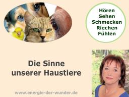 Webinar: Die Sinne unserer Haustiere
