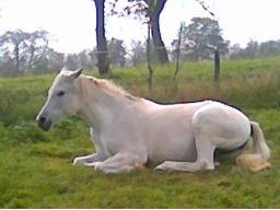 Webinar: Unterstützung für ältere Pferde