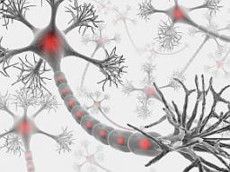 Webinar: 1. Trainingseinheit zum Gehirnentfaltungstraining