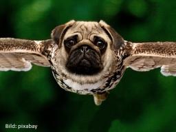 Webinar: Miasmen in der Tierheilkunde