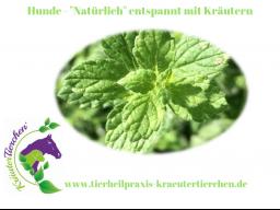 """Webinar: Hunde - """"Natülich"""" entspannt mit Kräutern"""