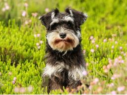 Webinar: Frühjahrsputz! Den Hund entgiften