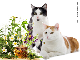 Webinar: Lavendel für die Katzenwellness
