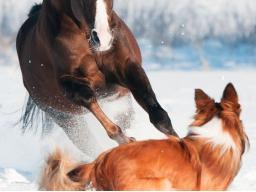 Webinar: Bi-Syndrome der Traditionellen Chinesischen Tiermedizin (TCVM)