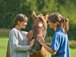 Webinar: Arthrose beim Pferd