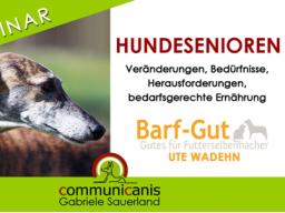 Webinar: Hundesenioren - Veränderungen, Herausforderungen, Einschränkungen, bedarfsgerechte Ernährung.