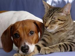 Webinar: Basics Blockkurs Kleintierakupunkturpunkte für Tierbesitzer