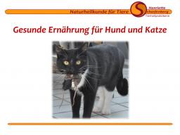Webinar: Gesunde Ernährung für Hunde und Katzen