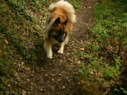 Webinar: Vergiftung beim Hund - Giftpflanzen