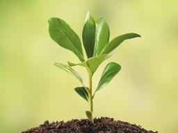 Webinar: Wie zarte Pflänzchen ganz groß rauskommen - Erfolgsfaktor Hochsensibilität