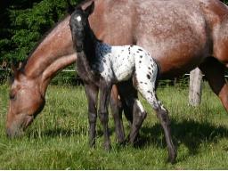 Webinar: Ausleiten & Entgiften bei Hunden und Pferden - Wie leite ich Antibiotikum, Wurmkuren, Narkosen...natürlich aus?