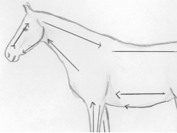 Webinar: einfache energetische Behandlung am Pferd