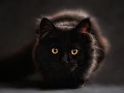 Webinar: Alles für die Katz`- Katzenernährung Teil 1 - Was ist drin im Dosenfutter?