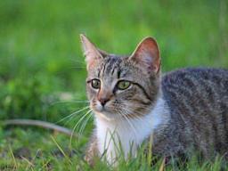 Webinar: Katzen-Ernährung bei CNI und Harnwegserkrankungen
