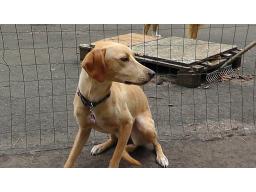 Webinar: Training mit ängstlichen Hunden