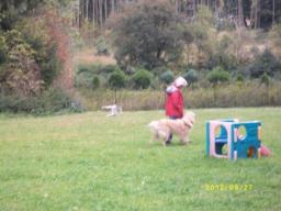 Webinar: Sachkunde Hund - Haltung, Pflege, Gesundheit