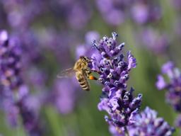 Webinar: Faszination Bienen