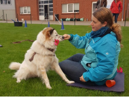 Webinar: Crossdogging Einsteigerwebinar für Hundetrainer