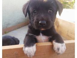 Welpen-Glück - ein Leitfaden für Hundehalter (Teil 3)
