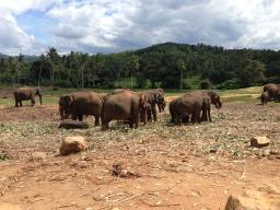 Webinar: Stressbewältigung mal besonders...anders! Online-Vortrag zum Coaching auf Sri Lanka!