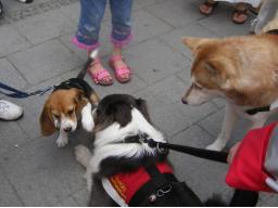 Webinar: Hunde-Alltags-Quiz T2