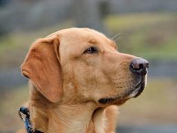 Webinar: BARF - Wie stellst Du Deinen Hund am besten um? Schritt für Schritt zur Rohfütterung