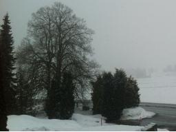 Webinar: Trance: Winterspaziergang zum Kraft schöpfen