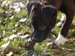 Webinar: Die Ernährung des Hundes