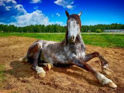 Webinar: Ganzheitliche Schmerztherapie beim Pferd - wenn's knackt und schmerzt!