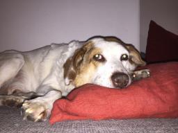 Webinar: Burnout beim Hund?