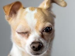 Webinar: Kommunikation für Hundetrainer 2