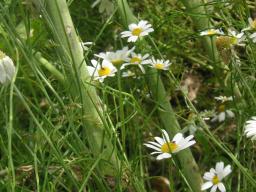 Webinar: Fit für den Sommer mit der Natur