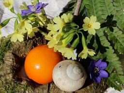 Webinar: DAS JAHRESKREISFEST OSTARA - Beginn des Frühlings