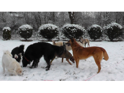 Webinar: Der Alltag mit mehreren Hunden
