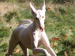 Webinar: Heilpflanzen bei tierischen Bewegungsproblemen