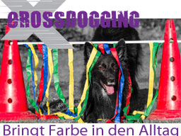 Webinar: Richterschulung Crossdogging