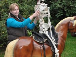 Webinar: Tierphysiotherapeutische Sattelprobe