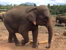 Webinar: Lebensaufbaucoaching - Online-Vortrag über das Elefantencoaching auf Sri Lanka
