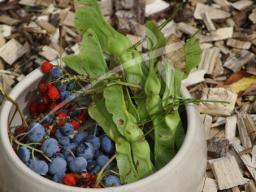 Webinar: Info Ausbildung 'Wildkräuter in der Tierernährung'