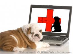 Webinar: Erste Hilfe beim Hund Teil 2