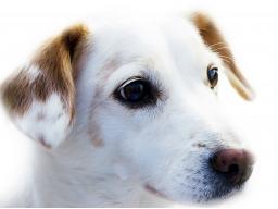 Webinar: Darm Nosoden - Nosoden Therapie für Hunde, Pferde, Katzen. Chronische Krankheiten erfolgreich behandeln