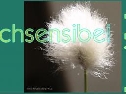 Webinar: Hochsensibilität - was ist das eigentlich? Gratis-Webinar