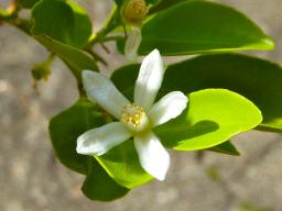 Webinar: Aromapflege Erfahrungsaustausch