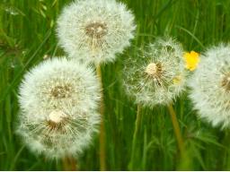 Webinar: Wahre Ursachen für Allergien erkennen