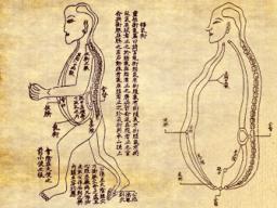 Webinar: Behandlung des Wundermeridians  Ren Mai (Konzeptionsgefäss)