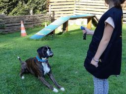 Webinar: Hundetraining: Grundgehorsam effektiv und stressfrei erlernen- Lerntheorie und Clickertraining